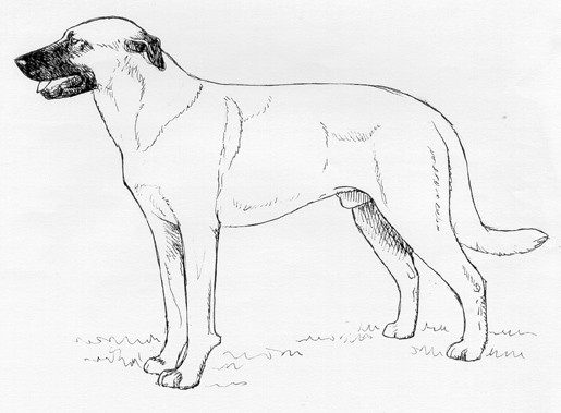 UKC Breed Standards: Estrela Mountain Dog