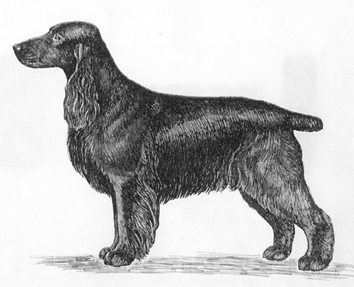 UKC Breed Standards: Field Spaniel