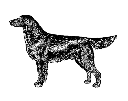 UKC Breed Standards: Flat Coasted Retriever