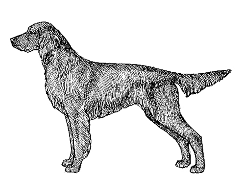 UKC Breed Standards: German Long Haired Pointer