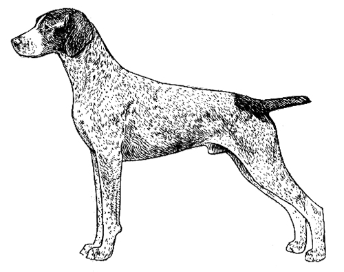 UKC Breed Standards: German Short Haired Pointer