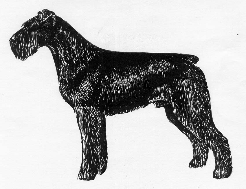 UKC Breed Standards: Giant Schnauzer