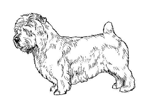 UKC Breed Standards: Glen of Imaal Terrier