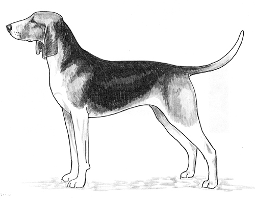 UKC Breed Standards: Great Anglo-Francais Tricolor Hound