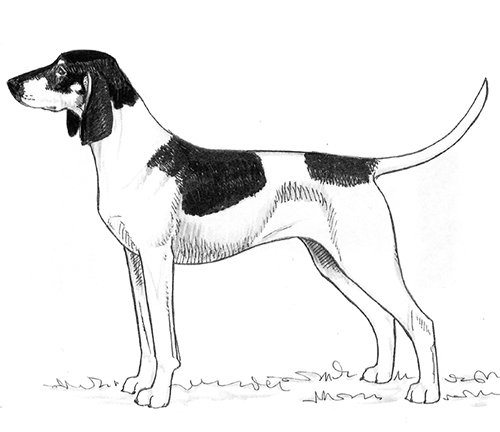 UKC Breed Standards: Great Anglo-Francais White And Black Hound
