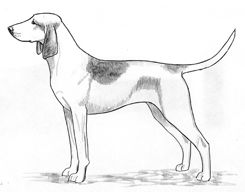 UKC Breed Standards: Great Anglo-Francais White And Orange Hound