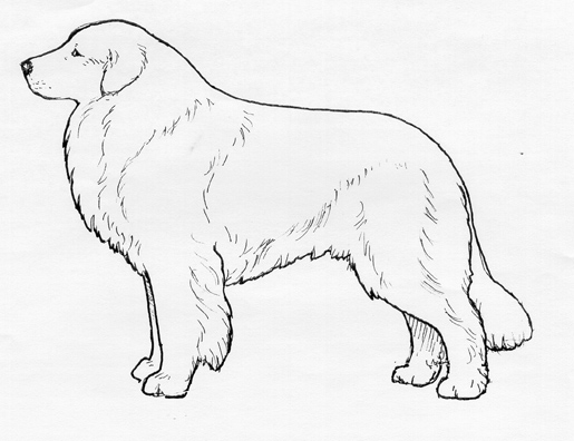 UKC Breed Standards: Great Pyrenees