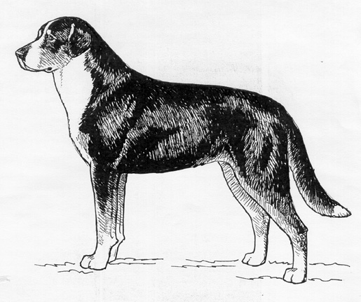 UKC Breed Standards: Greater Swiss Mountain Dog