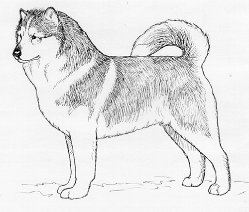UKC Breed Standards: Greenland Dog