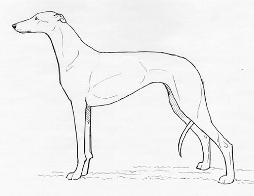 UKC Breed Standards: Greyhound