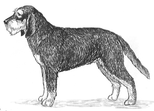 UKC Breed Standards: Griffon Nivernais