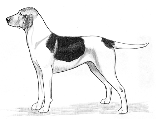 UKC Breed Standards: Haldenstover (Halden Hound)