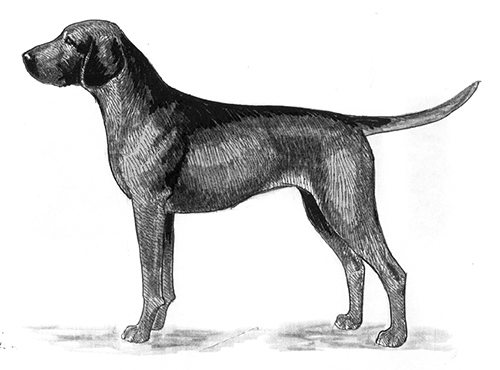 UKC Breed Standards: Hanoverian Hound