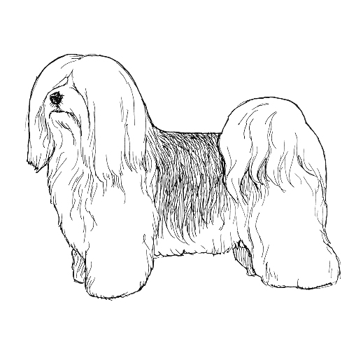 UKC Breed Standards: Havanese
