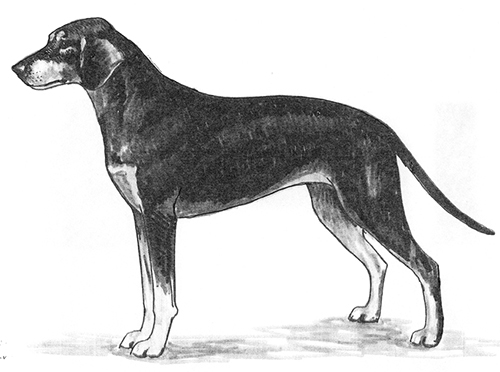 UKC Breed Standards: Hellenic hound