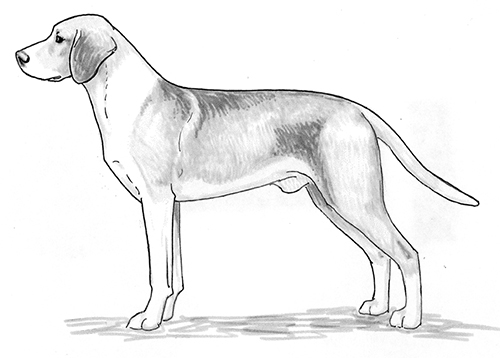 UKC Breed Standards: Hygen Hound