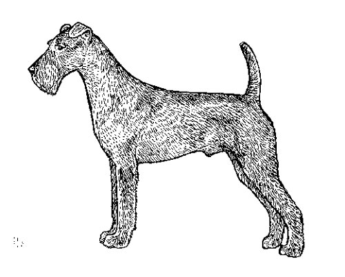 UKC Breed Standards: Irish Terrier