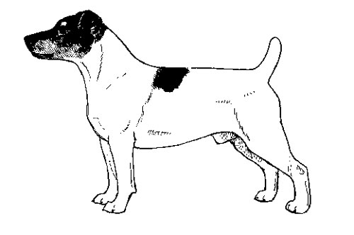 UKC Breed Standards: Jack Russell Terrier