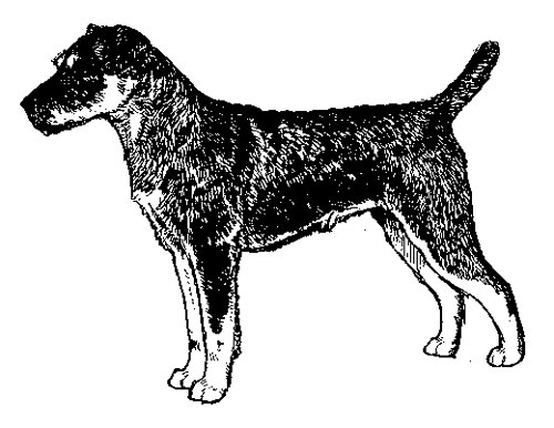 UKC Breed Standards: Jagdterrier