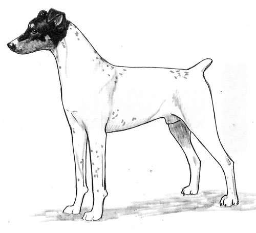 UKC Breed Standards: Japanese Terrier