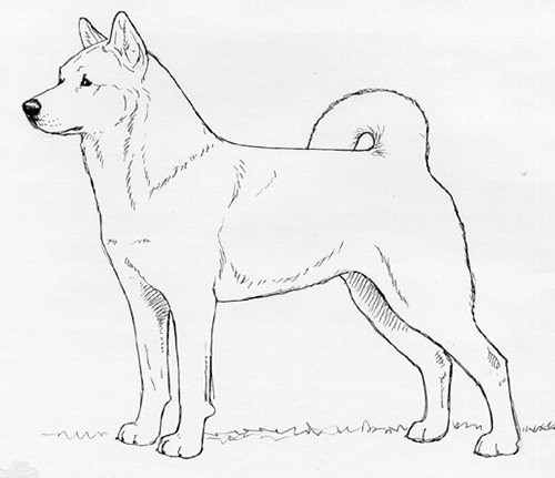 UKC Breed Standards: Jindo