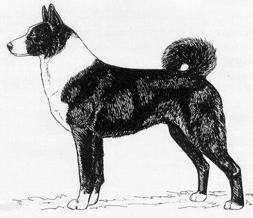 UKC Breed Standards: Karelian Bear Dog