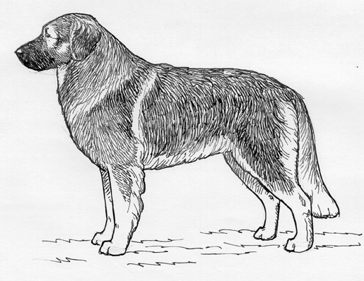 UKC Breed Standards: Karst Shepherd Dog