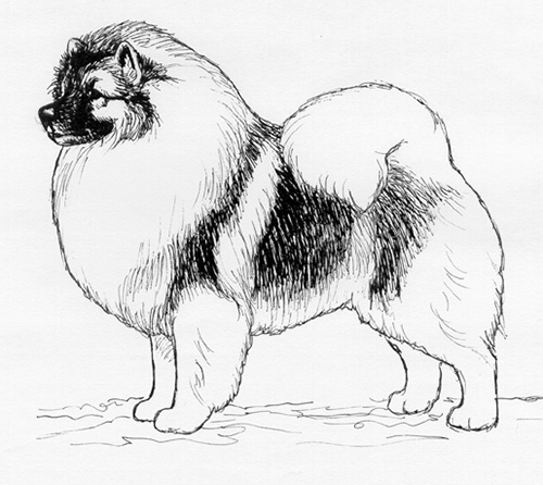 UKC Breed Standards: Keeshond