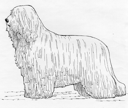 UKC Breed Standards: Komondor