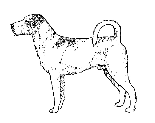 UKC Breed Standards: Kromfohrlander