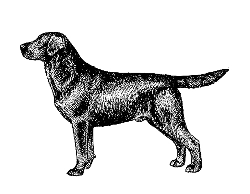 UKC Breed Standards: Labrador Retriever