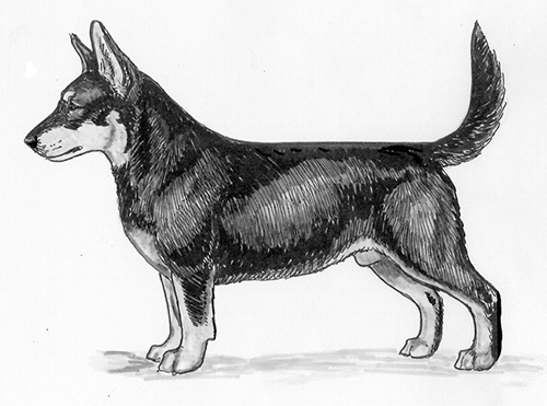 UKC Breed Standards: Lancashire Heeler