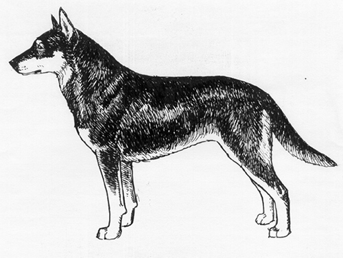 UKC Breed Standards: Lapinporokoira