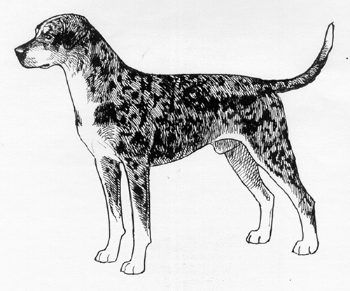 UKC Breed Standards: Louisiana Catahoula Leopard Dog