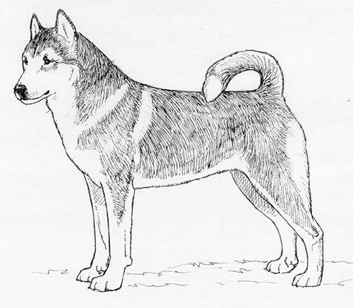 UKC Breed Standards: Lundehund