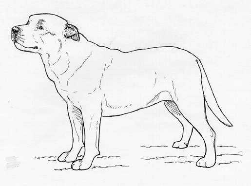 UKC Breed Standards: Majorca Mastiff