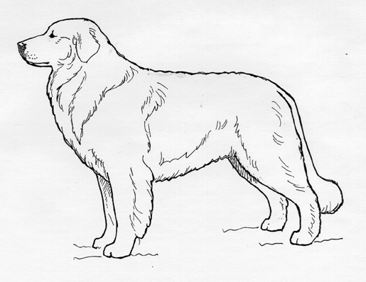 UKC Breed Standards: Maremma Sheepdog