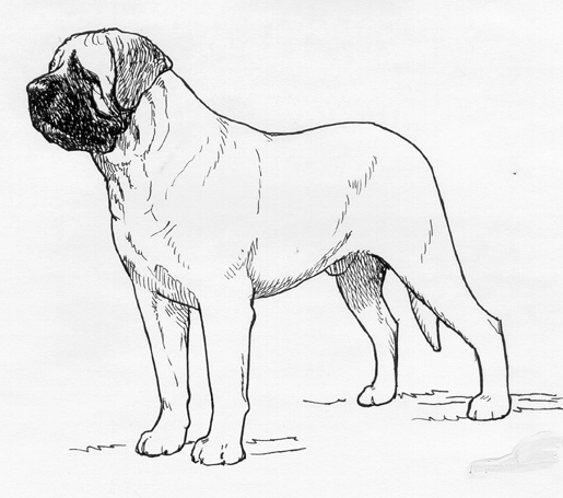 UKC Breed Standards: Mastiff