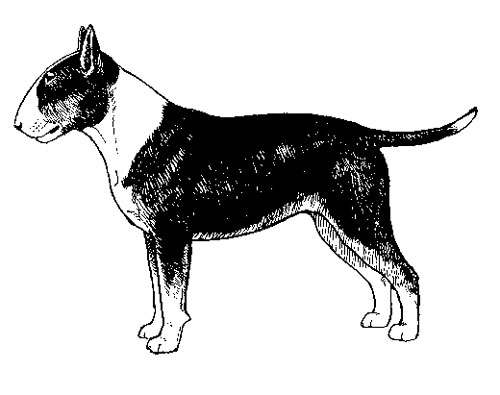UKC Breed Standards: Miniature Bull Terrier