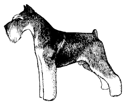 UKC Breed Standards: Miniature Schnauzer