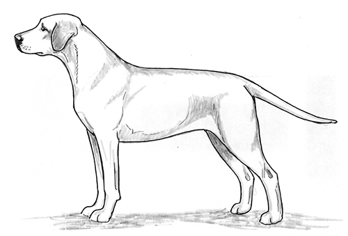 UKC Breed Standards: Mountain Cur