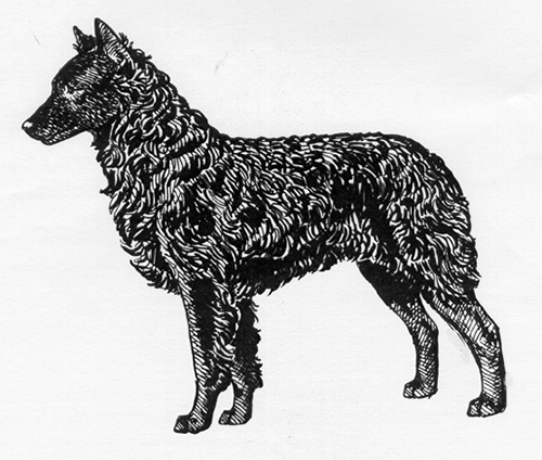 UKC Breed Standards: Mudi