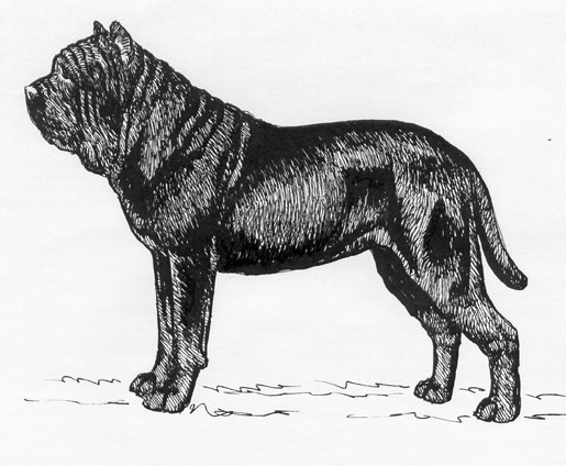 UKC Breed Standards: Neopolitan Mastiff