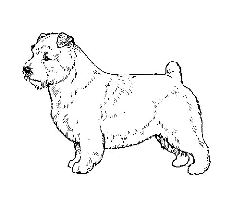 UKC Breed Standards: Norfolk Terreir