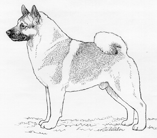 UKC Breed Standards: Norwegian Elkhound