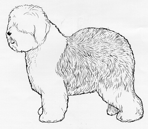 UKC Breed Standards: Old English Sheepdog
