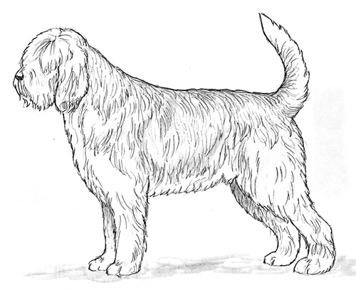 UKC Breed Standards: Otterhound