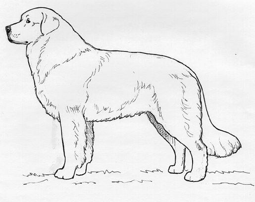 ukC Breed Standards: Owczarek Podhalanski