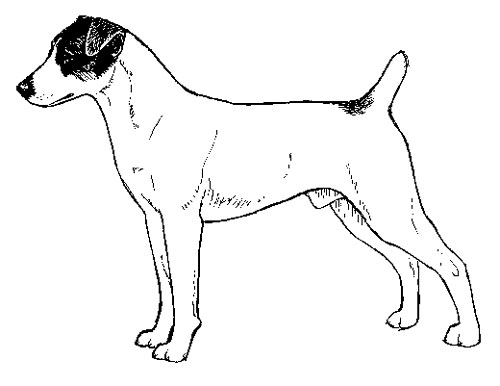 UKC Breed Standards: Parson Russell Terrier