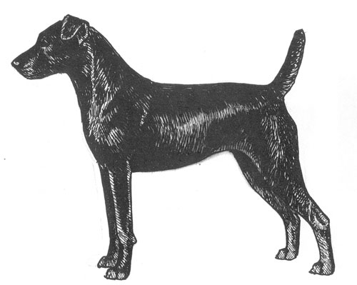 Breed Standards Patterdale Terrier United Kennel Club Ukc